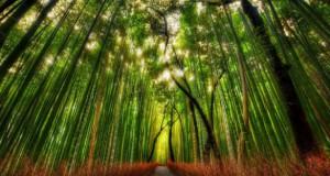 Υπέροχο δάσος από Bamboo στο Kyoto