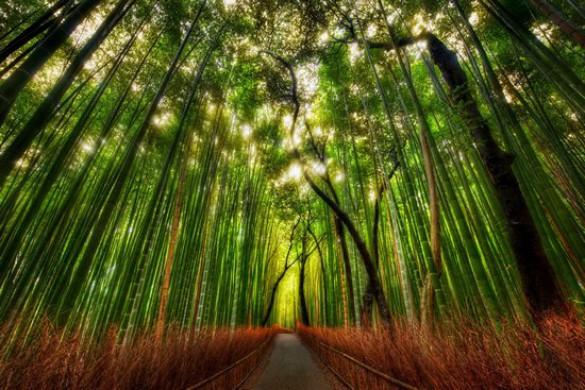 Υπέροχο δάσος από Bamboo στο Kyoto (4)