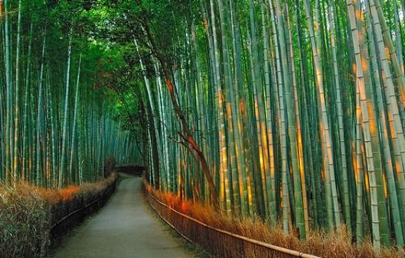 Υπέροχο δάσος από Bamboo στο Kyoto (5)