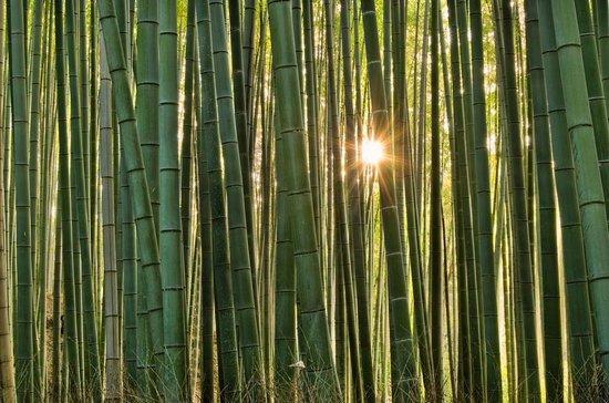 Υπέροχο δάσος από Bamboo στο Kyoto (6)
