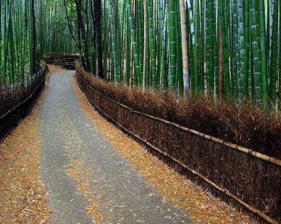 Υπέροχο δάσος από Bamboo στο Kyoto (7)