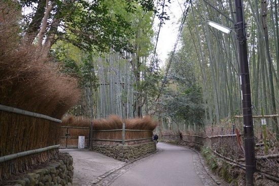 Υπέροχο δάσος από Bamboo στο Kyoto (8)