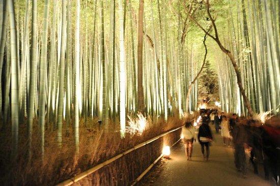 Υπέροχο δάσος από Bamboo στο Kyoto (9)