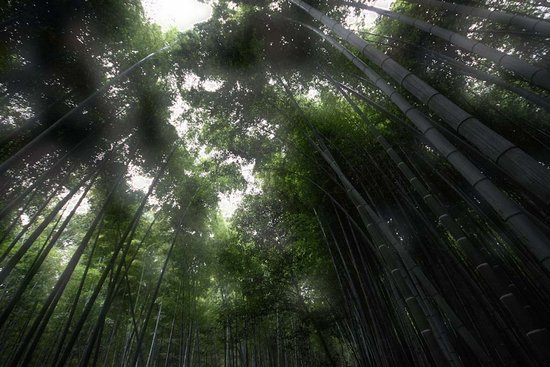 Υπέροχο δάσος από Bamboo στο Kyoto (11)