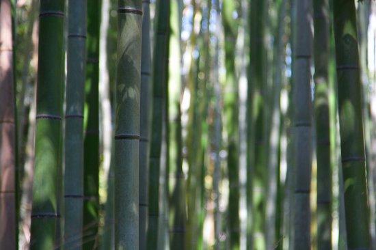 Υπέροχο δάσος από Bamboo στο Kyoto (12)