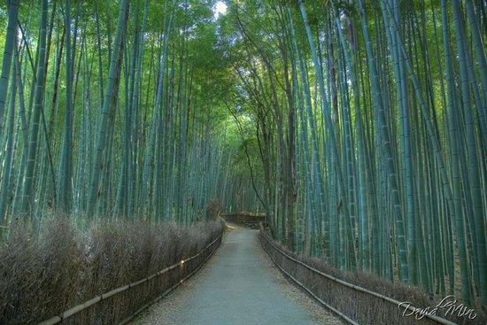 Υπέροχο δάσος από Bamboo στο Kyoto (13)