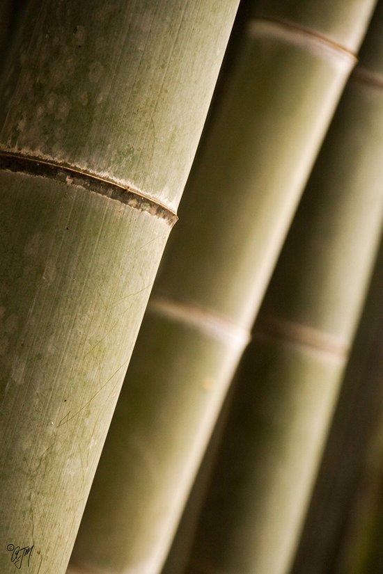 Υπέροχο δάσος από Bamboo στο Kyoto (14)