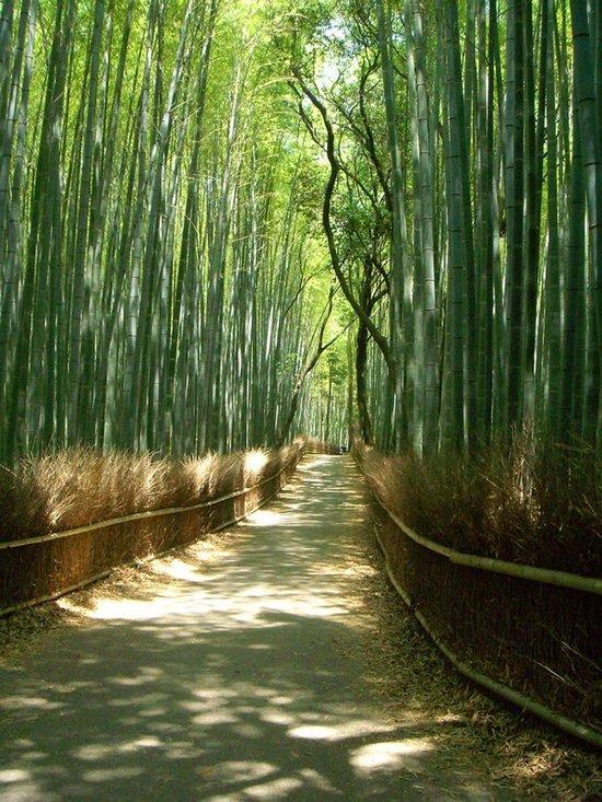 Υπέροχο δάσος από Bamboo στο Kyoto (15)