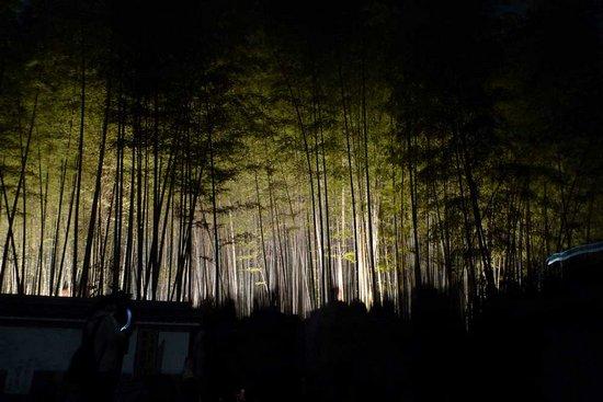 Υπέροχο δάσος από Bamboo στο Kyoto (16)