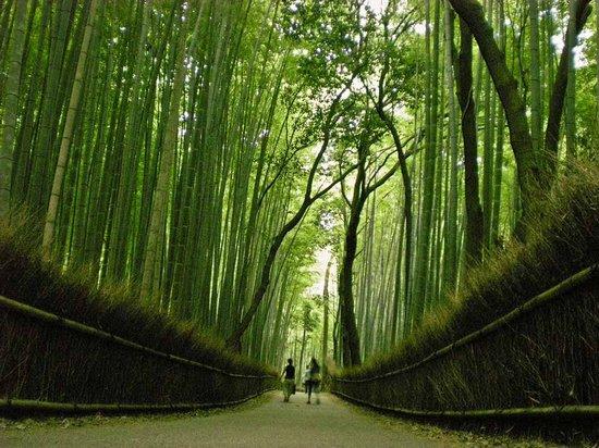 Υπέροχο δάσος από Bamboo στο Kyoto (17)