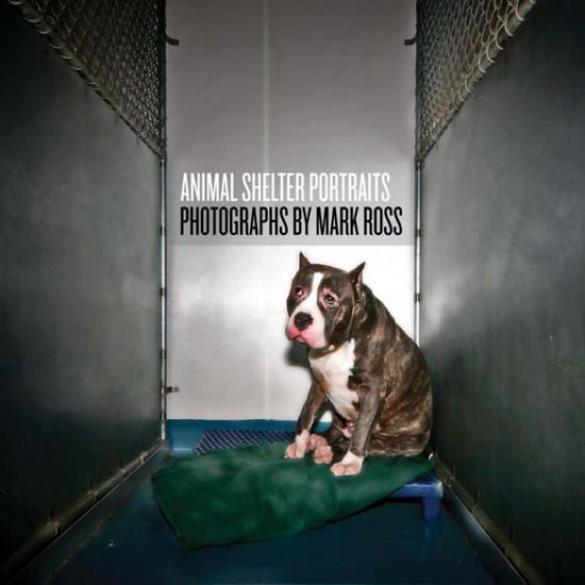 Θλιβερές φωτογραφίες ζώων που περιμένουν την ευθανασία (1)