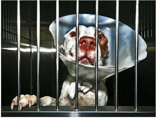Θλιβερές φωτογραφίες ζώων που περιμένουν την ευθανασία (7)