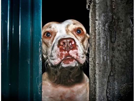 Θλιβερές φωτογραφίες ζώων που περιμένουν την ευθανασία (8)