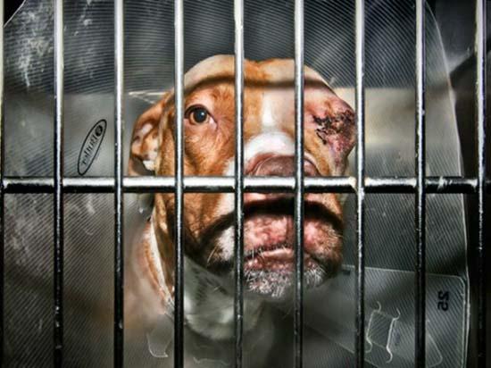 Θλιβερές φωτογραφίες ζώων που περιμένουν την ευθανασία (11)