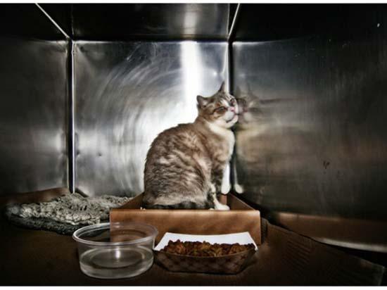 Θλιβερές φωτογραφίες ζώων που περιμένουν την ευθανασία (13)