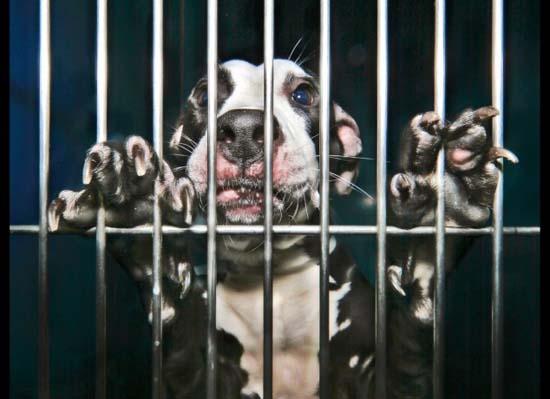 Θλιβερές φωτογραφίες ζώων που περιμένουν την ευθανασία (14)