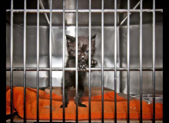 Θλιβερές φωτογραφίες ζώων που περιμένουν την ευθανασία (15)