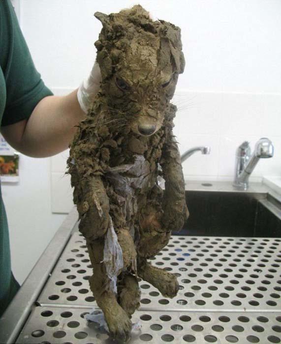 Αλεπουδάκι κόλλησε στη λάσπη (1)