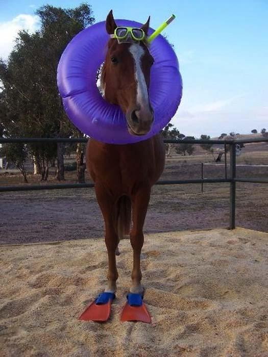 Άλογα που μισούν τη ζωή τους (3)