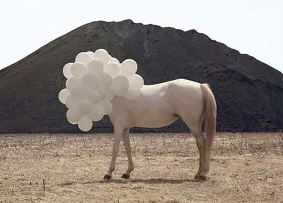 Άλογα που μισούν τη ζωή τους (4)