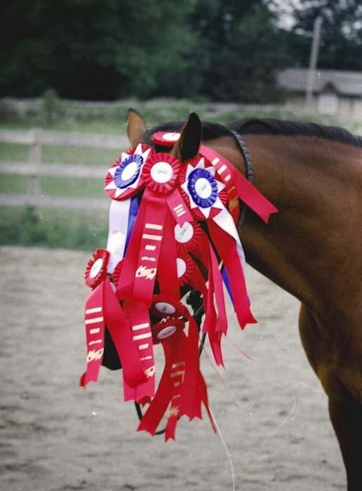 Άλογα που μισούν τη ζωή τους (6)
