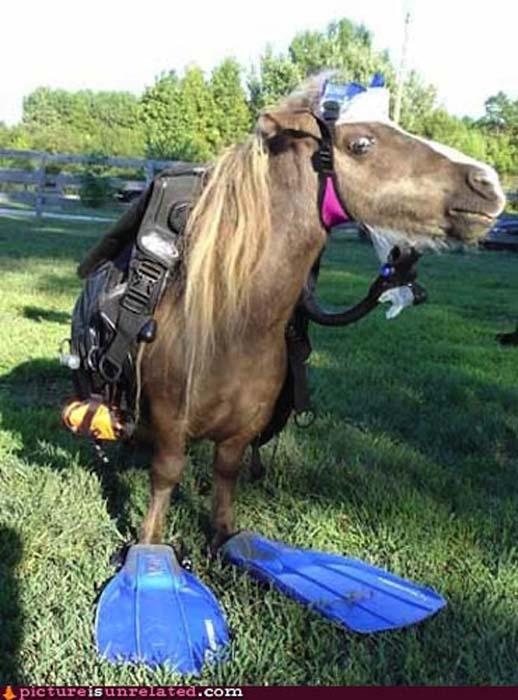 Άλογα που μισούν τη ζωή τους (8)