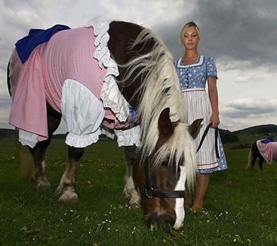 Άλογα που μισούν τη ζωή τους (10)