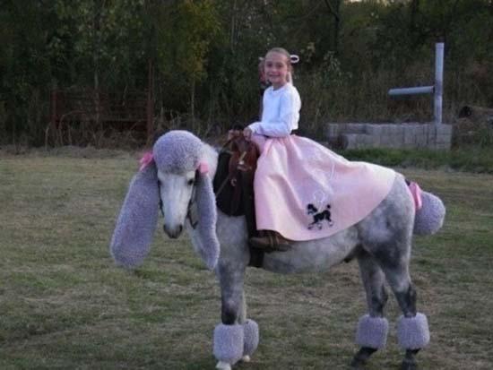 Άλογα που μισούν τη ζωή τους (11)