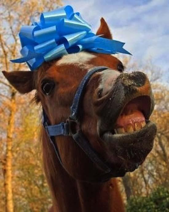Άλογα που μισούν τη ζωή τους (18)