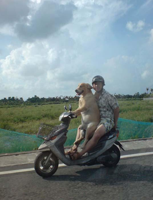 Ανεξήγητες φωτογραφίες με σκύλους (5)