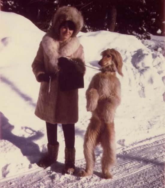 Ανεξήγητες φωτογραφίες με σκύλους (6)