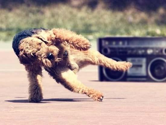 Ανεξήγητες φωτογραφίες με σκύλους (10)
