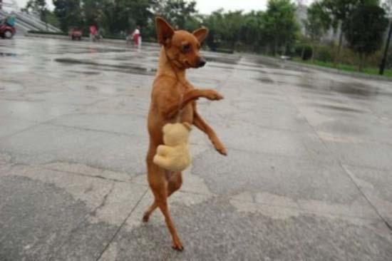Ανεξήγητες φωτογραφίες με σκύλους (18)