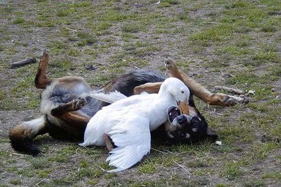 Ανεξήγητες φωτογραφίες με σκύλους (20)