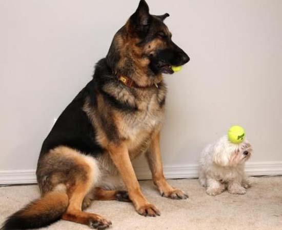Ανεξήγητες φωτογραφίες με σκύλους (23)