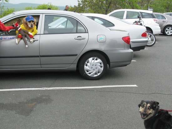 Ανεξήγητες φωτογραφίες με σκύλους (25)