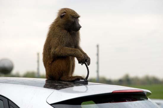 Πως δοκιμάζουν οι κατασκευαστές της Huyndai τα αυτοκίνητα; (1)