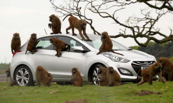 Πως δοκιμάζουν οι κατασκευαστές της Huyndai τα αυτοκίνητα; (2)