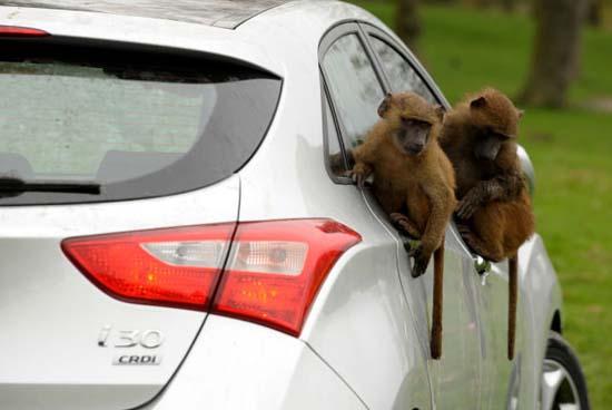 Πως δοκιμάζουν οι κατασκευαστές της Huyndai τα αυτοκίνητα; (5)
