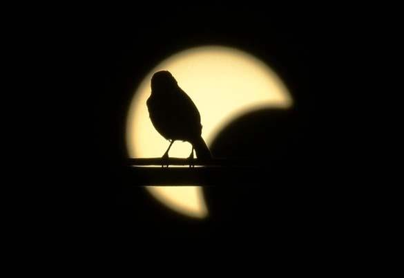 Έκλειψη Ηλίου 2012 (25)