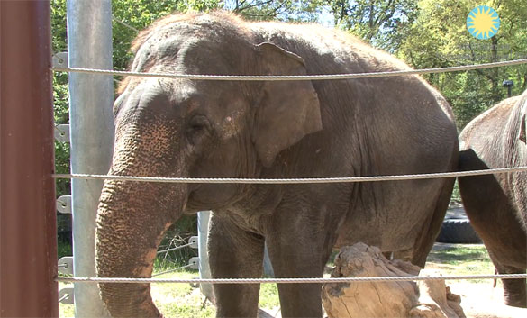 Shanti, ο ελέφαντας που παίζει φυσαρμόνικα