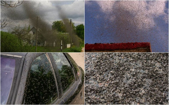Επιδρομή από εκατομμύρια κουνούπια σε χωριό της Ρωσίας (1)