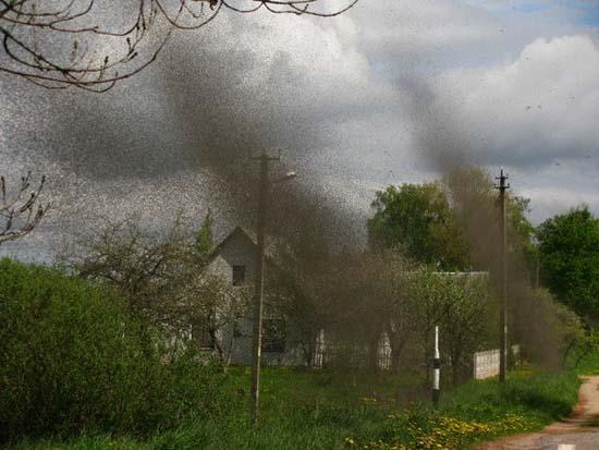 Επιδρομή από εκατομμύρια κουνούπια σε χωριό της Ρωσίας (2)