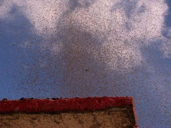 Επιδρομή από εκατομμύρια κουνούπια σε χωριό της Ρωσίας (3)