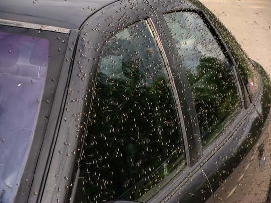 Επιδρομή από εκατομμύρια κουνούπια σε χωριό της Ρωσίας (6)