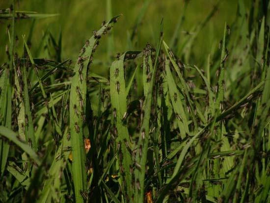 Επιδρομή από εκατομμύρια κουνούπια σε χωριό της Ρωσίας (10)