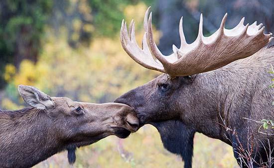 Ερωτευμένα ζώα (2)