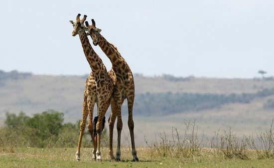Ερωτευμένα ζώα (3)