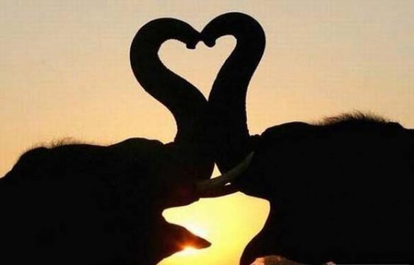 Ερωτευμένα ζώα (5)