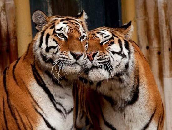 Ερωτευμένα ζώα (10)